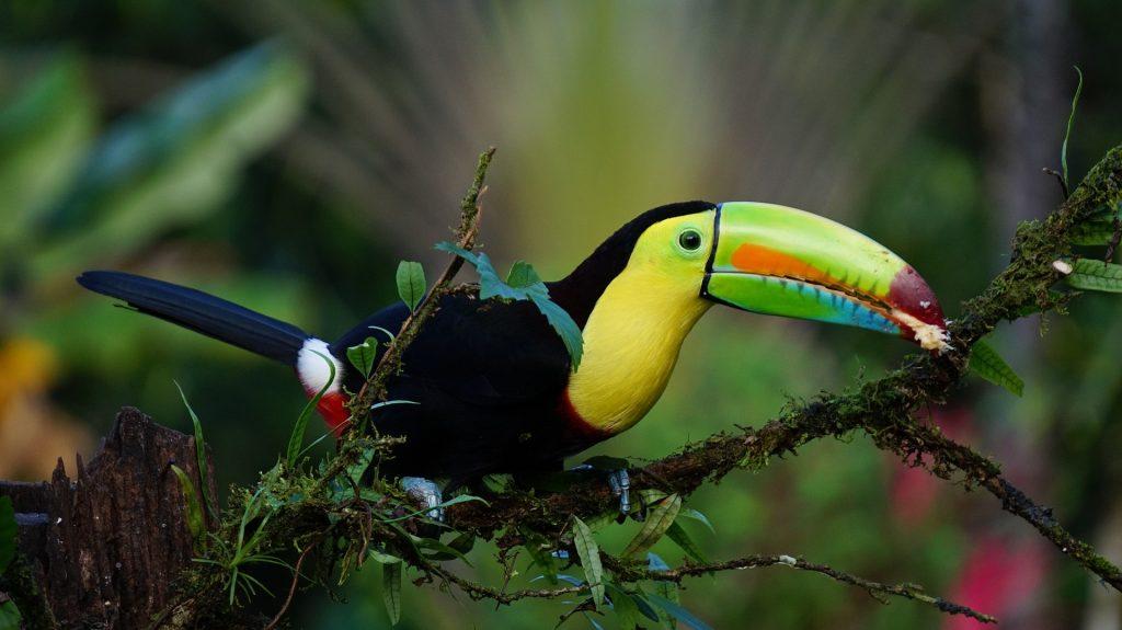 destinos de viajes de novios originales Tucán Costa Rica