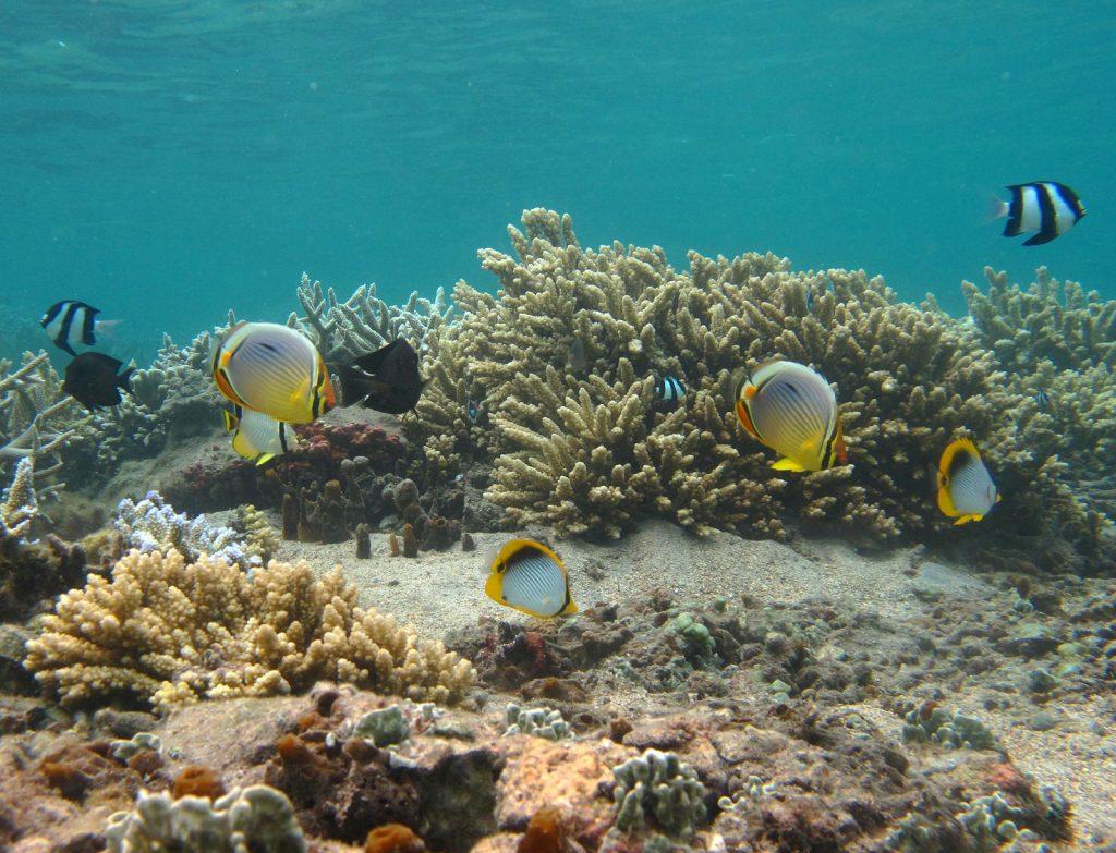 Peces islas Reunión y Mauricio