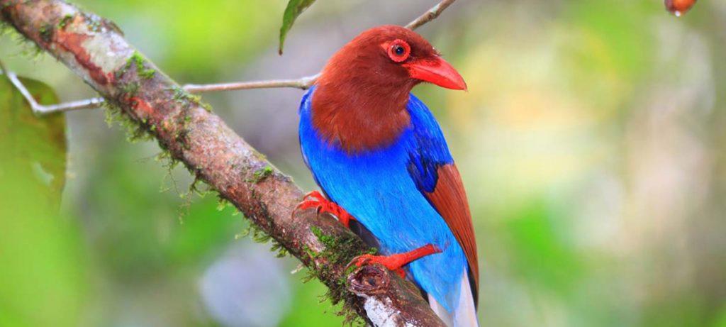Ave en parque nacional Sri Lanka
