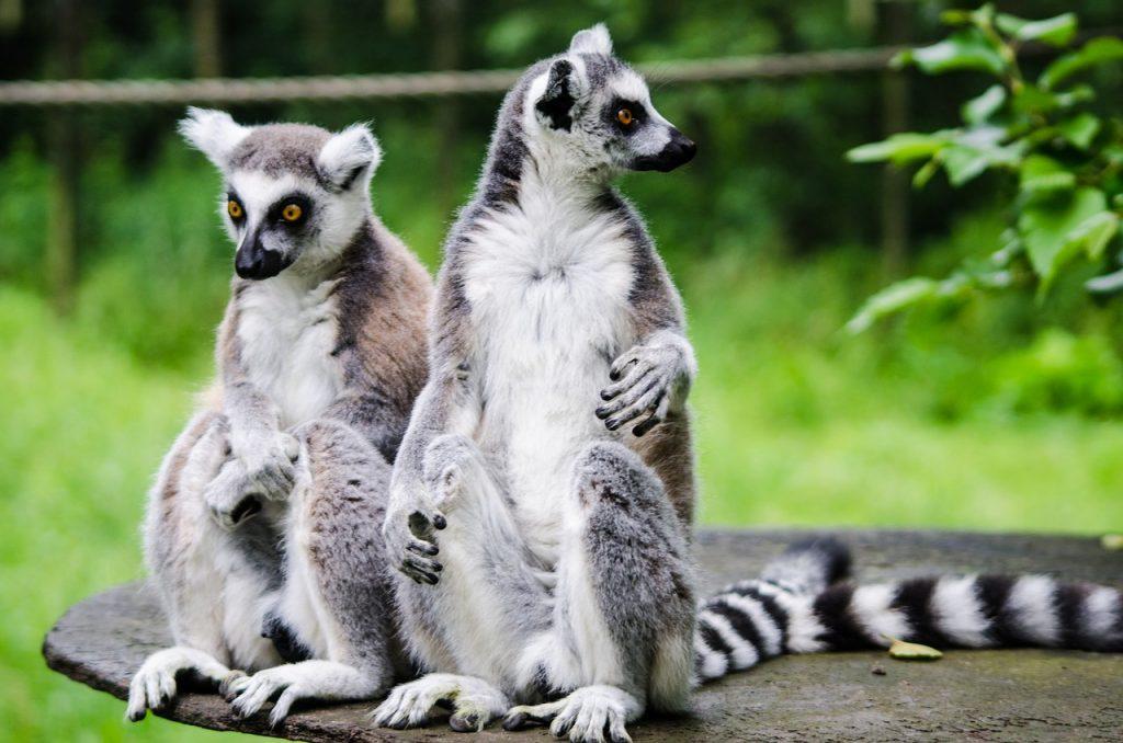 Lemures Viaje a Madagascar