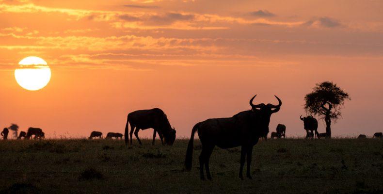 safari fotográfico en Kenia