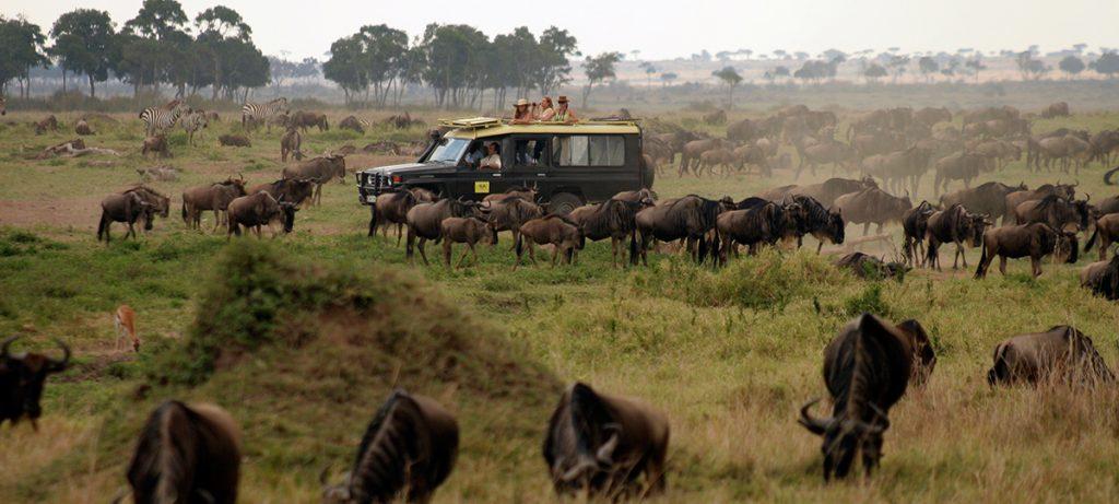 safari fotográfico gran migración
